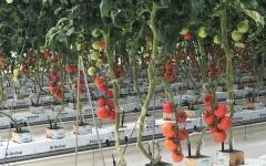 الصورة: الصورة: أكاديمية العلوم الزراعية ترفد سوق العمل بالكوادر الوطنية