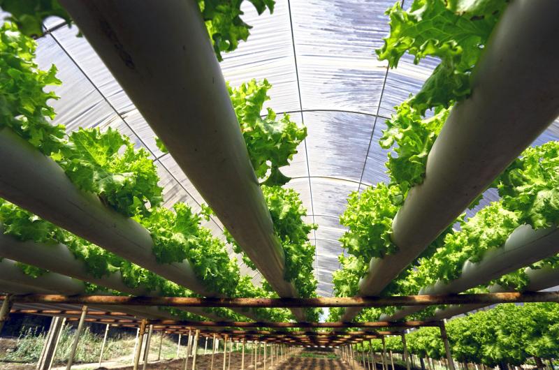الصورة : «تحدي تكنولوجيا الغذاء » يهدف إلى ترويج أهمية إنتاج غذائي أكثر استدامة في الإمارات   أرشيفية