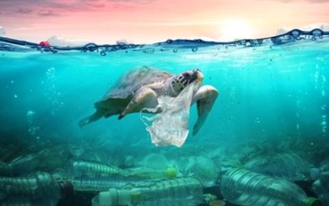 الصورة: الصورة: المخلفات البلاستيكية خطر يهدد الحياة البحرية