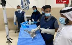 الصورة: الصورة: بلدية دبي تسرد لـ «البيان» قصة إنقاذ الطائر الجريح على الشاطئ