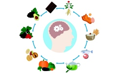 الصورة: الصورة: طريقة لبرمجة المخ والتحكم في تفضيلاته للطعام