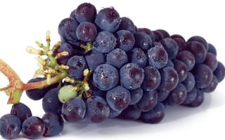الصورة: الصورة: العنب الأسود يقي من الزهايمر