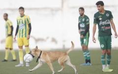الصورة: الصورة: كلب يوقف مباراة كرة قدم