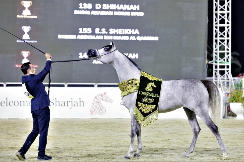 الصورة : مربط دبي يتصدر المشهد في مهرجان الشارقة | البيان