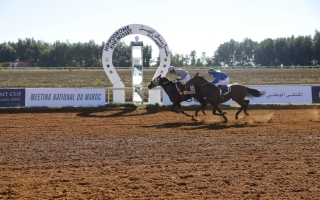 الصورة: الصورة: «استقبال ار ام» بطل كأس رئيس الدولة للخيول في المغرب