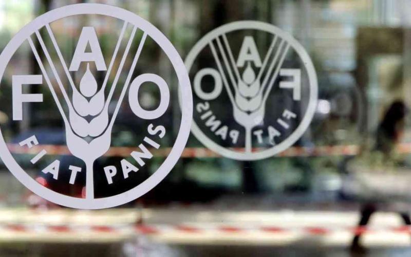 الصورة: الصورة: «فاو»: مؤشر أسعار الغذاء قفز في نوفمبر