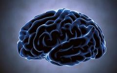 الصورة: الصورة: التهاب السحايا عدوى خطيرة تصيب الدماغ