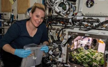 الصورة: الصورة: رواد الفضاء يحصدون الفجل على متن المحطة الفضائية الدولية