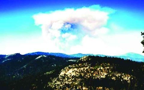 الصورة: الصورة: أداة لرسم أشجار كاليفورنيا تحسباً للحرائق