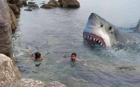 الصورة: الصورة: ارتفاع قياسي في عدد الهجمات القاتلة لأسماك القرش