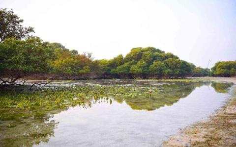 الصورة: الصورة: جزيرة في الإمارات عمرها أكثر من 6500 عام