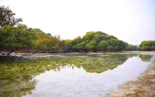الصورة: الصورة: «الأكعاب» جزيرة إماراتية عمرها أكثر من 6500 عام
