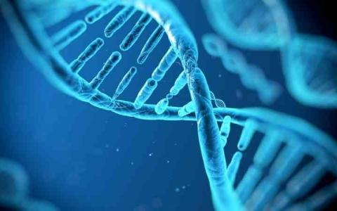 الصورة: الصورة: اكتشاف الجين المرتبط بالنحافة