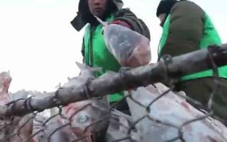 الصورة: الصورة: شاهد.. صيد الأسماك من تحت طبقات الثلوج