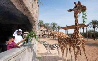 الصورة: الصورة: حديقة الحيوانات..تجربة مع الضباب