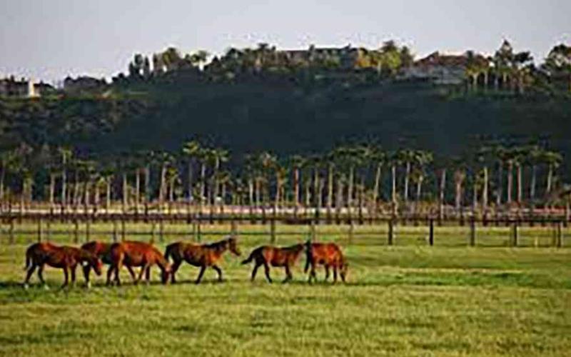 الصورة: الصورة: «بيل جيتس» أكبر مالك للأراضي الزراعية في أمريكا بـ 242 ألف فدان