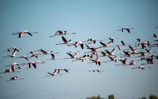 الصورة: الصورة: خور أم القيوين .. تستوطنه طيور الفلامنغو وتزينه أشجار القرم