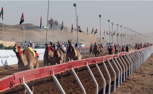 ولي عهد أم القيوين يشهد منافسات اليوم الثاني من مهرجان محمد بن زايد لسباقات الهجن