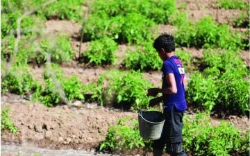 الصورة: الصورة: إسحاق طفل يمني يواجه الحرب بالزراعة