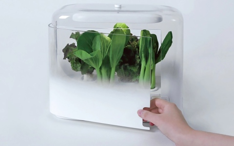 الصورة: الصورة: بستنة خاصة لمطبخ صحي