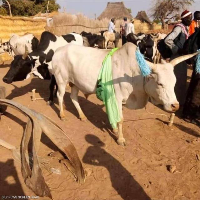 صورة رجل أعمال يدفع مهر ابنة رئيس جنوب السودان .. 500 بقرة – منوعات