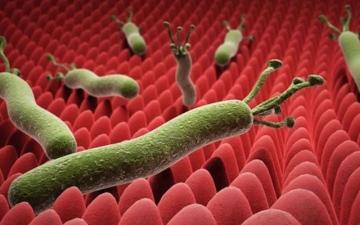 الصورة: الصورة: ثلثا سكان العالم مصابون بها..أعراض ومضاعفات جرثومة المعدة