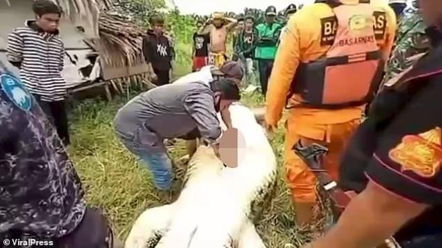 صورة شاهد.. استخراج جثة طفل كاملة من بطن تمساح – منوعات