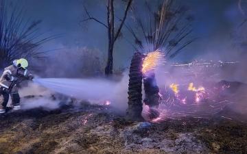 الصورة: الصورة: دفاع مدني دبي يسيطر على حريق مركبة امتد إلى الأشجار دون إصابات