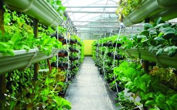 الصورة: الصورة: مستقبل الزراعة في الإمارات.. روبوتات تحرث الأرض و«درون» ترش الحبوب
