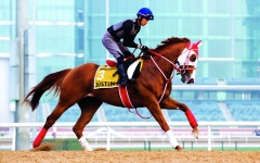 الصورة: الصورة: الياباني ريوسي ساكاي: المشاركة في كأس دبي حلم