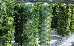 الصورة: الصورة: حديقة عمودية لإنتاج الخضراوات لموظفي «فارنك»