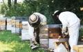 الصورة: الصورة: «اتحاد منتجي العسل» ينضم إلى «جناح فرنسا» في «إكسبو دبي»