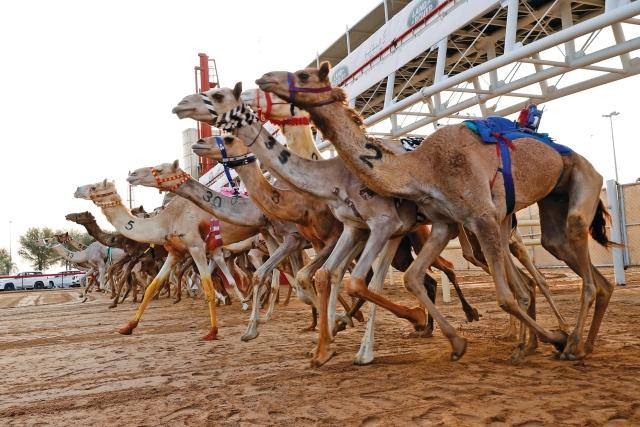 حمدان بن محمد يشهد ختام المهرجان التراثي في المرموم