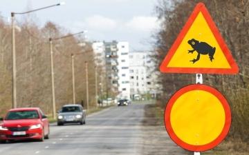 الصورة: الصورة: من أجل الضفادع.. إستونيا تغلق طريقاً رئيساً