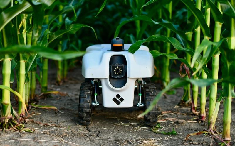 الصورة: الصورة: أنظمة روبوتية تتواصل مع النباتات
