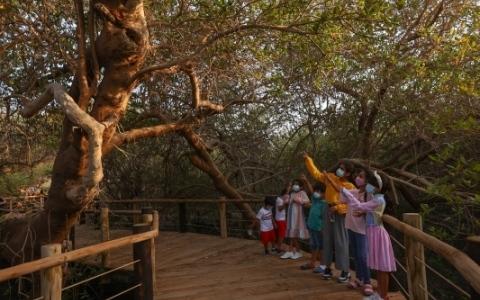 الصورة: الصورة: بيئة المانغروف