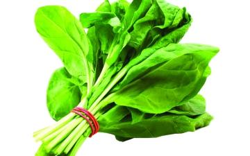 الصورة: الصورة: السبانخ كنز من العناصر الغذائية