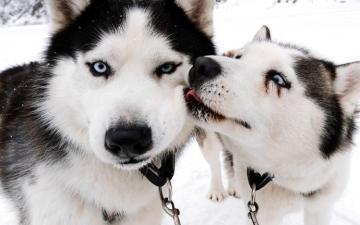 الصورة: الصورة: قانون يفرض على المطلقين التناوب في رعاية الحيوانات