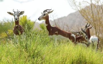 الصورة: الصورة: حديقة الحيوانات في العين تستقبل 645 مولوداً خلال العام الماضي