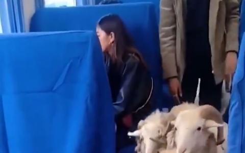 الصورة: الصورة: شاهد.. حيوانات تقتحم قطار ركاب في الصين