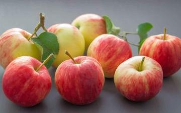 الصورة: الصورة: اكتشاف فوائد مذهلة لتناول التفاح