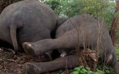 الصورة: الصورة: صاعقة تقتل 18 فيلاً في الهند في ثوانٍ