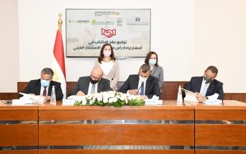 """الصورة: الصورة: تحالف صندوق مصر السيادي و""""هيرميس"""" يستحوذ على 76% من بنك الاستثمار العربي"""