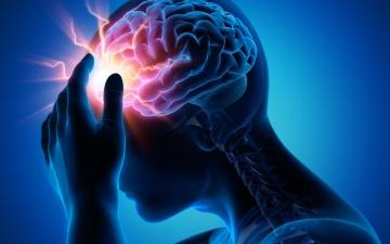 الصورة: الصورة: فهم الخلايا العصبية يساعد الأطباء في علاج السكتات القلبية