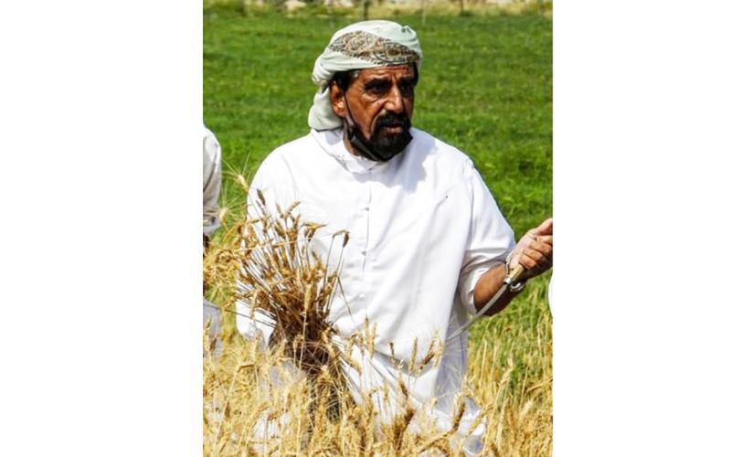 الصورة: الصورة: «البر».. بداية الزراعة وطقوس الحصاد