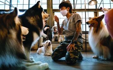 الصورة: الصورة: التعايش مع الضغط النفسي.. هل يتعلّمه الإنسان من الحيوانات؟