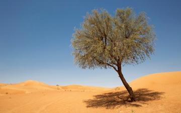 الصورة: الصورة: جامعة الإمارات توقع اتفاقية مع «كفو» بشأن أشجار الغاف
