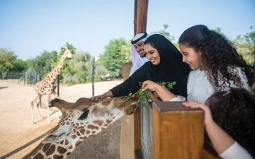الصورة: الصورة: حديقة الحيوانات بالعين تكرس جهودها للحفاظ على «زراف روثشيلدز»