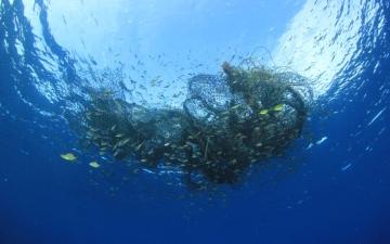 الصورة: الصورة: «نواخذة بدبي»: «تنظيم الثروة السمكية» أنصف الصيادين