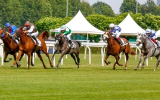 الصورة: الصورة: «حيان» يحصد كأس رئيس الدولة للخيول العربية في إيطاليا